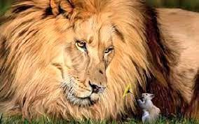Le lion sauve le rat
